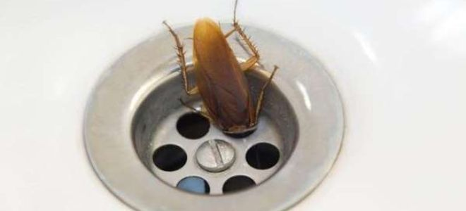 Что делать, если в ванной появились насекомые