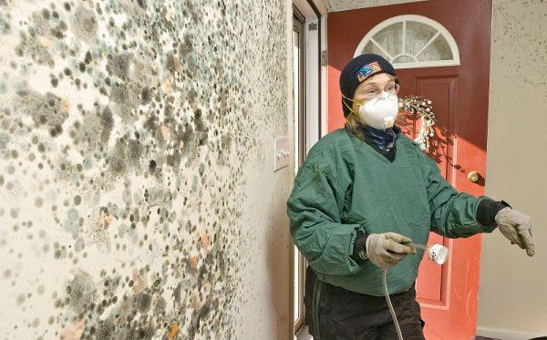 Большое  образование грибка и плесени на стене