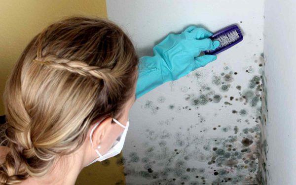 Как отмыть грибок навсегда в ванной и по всей квартире