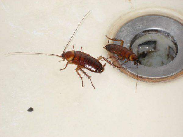 Как избавиться от маленьких насекомых в ванной комнате